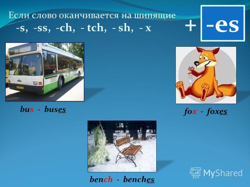 + Если слово оканчивается на шипящие -s, -ss, -ch, - tch, - sh, - x -es bus - buses fox - foxes bench - benches