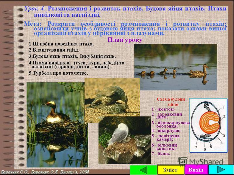 Вихід Зміст Урок 3. Внутрішня будова та особливості процесів життєдіяльності птаха. Мета: Сформувати знання учнів про внутрішню будову і процеси життєдіяльності птахів; вказати на їхні особливості у зв'язку зі здатністю до польоту. План уроку 1.Травн
