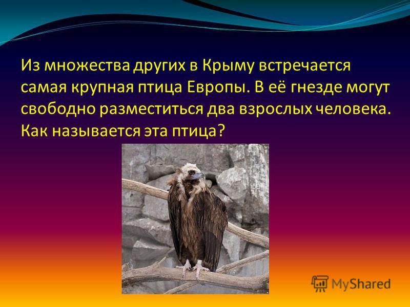 Из множества других в Крыму встречается самая крупная птица Европы. В её гнезде могут свободно разместиться два взрослых человека. Как называется эта птица?