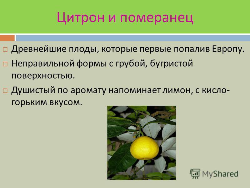 ПОМЕЛО В дикорастущем виде не встречаются. Считаются предком грейпфрута. Плоды округлой или грушевидной формы, в диаметре до 20 см, масса до 3 кг. Кожура толстая зеленого или желтого цвета. Мякоть от желтого до красного цвета, с крупными соковыми яче