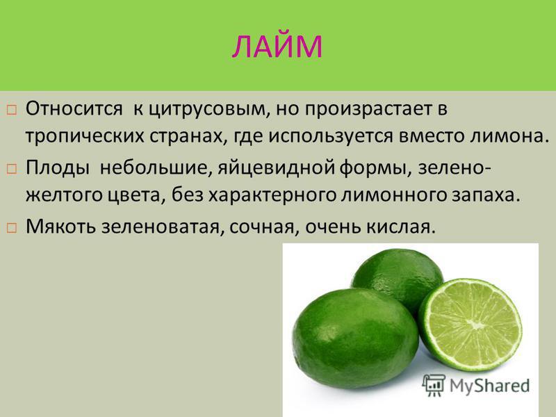 Цитрон и померанец Древнейшие плоды, которые первые попалив Европу. Неправильной формы с грубой, бугристой поверхностью. Душистый по аромату напоминает лимон, с кисло - горьким вкусом.