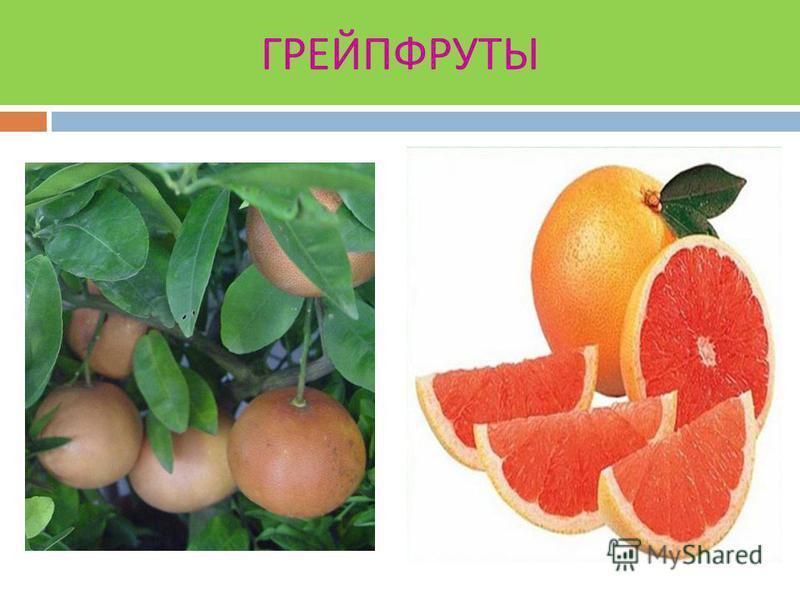 Плоды имеют овальную или яйцевидную форму желтого цвета с гладкой или бугристой поверхностью. Дольки лимона плотно срастаются между собой и кожурой. Мякоть содержит значительно больше кислот до 5,6% и меньше сахара 1-2%. В кожице витамина С и РР в 3