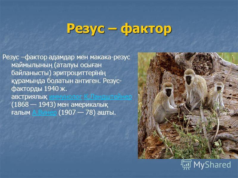 Резус – фактор Резус –фактор адамдар мен макака-резус маймылының (аталуы осыған байланысты) эритроциттерінің құрамында болатын антиген. Резус- факторды 1940 ж. австриялық иммунолог К.Ландштейнер (1868 1943) мен америкалық ғалым А.Винер (1907 78) ашты
