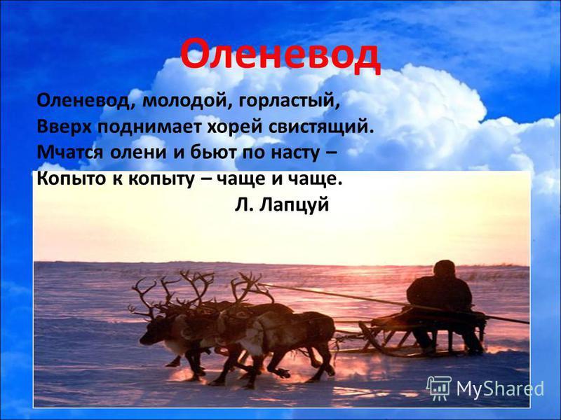 Оленевод Оленевод, молодой, горластый, Вверх поднимает хорей свистящий. Мчатся олени и бьют по насту – Копыто к копыту – чаще и чаще. Л. Лапцуй