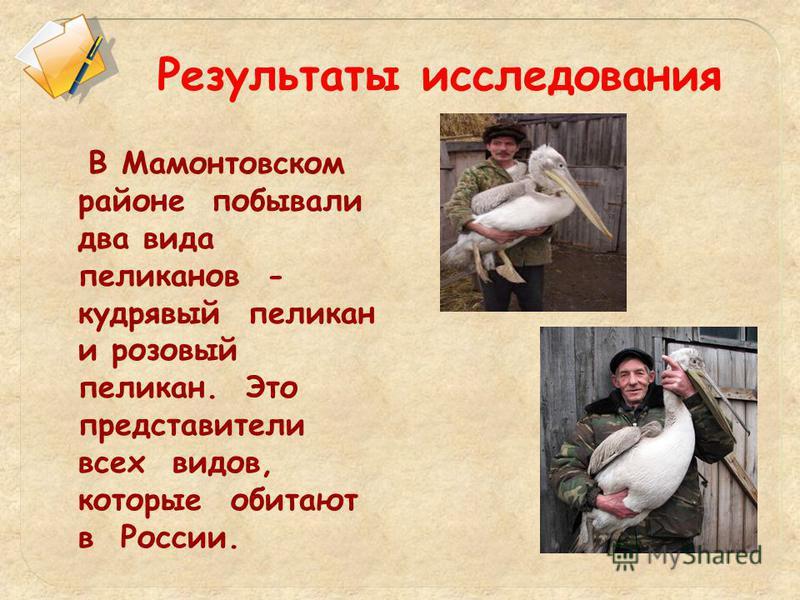 Результаты исследования В Мамонтовском районе побывали два вида пеликанов - кудрявый пеликан и розовый пеликан. Это представители всех видов, которые обитают в России.
