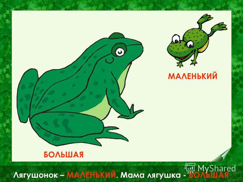 А это БОЛЬШАЯ ЗЕЛЁНАЯ мама лягушка