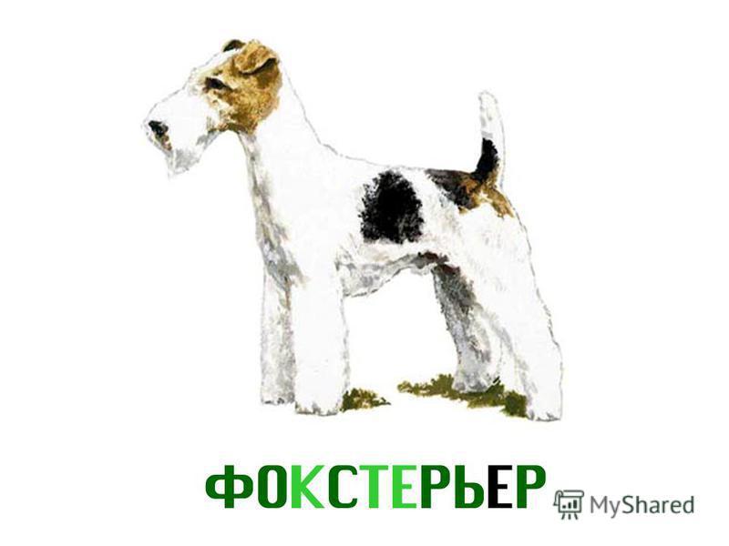 ФОКСТЕРЬЕР