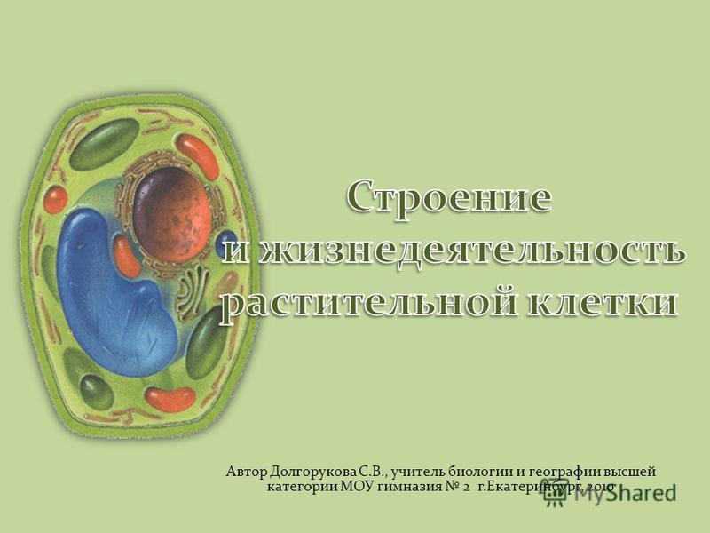Автор Долгорукова С.В., учитель биологии и географии высшей категории МОУ гимназия 2 г.Екатеринбург, 2010
