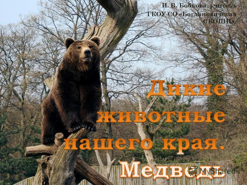И. В. Бобкова, учитель ГКОУ СО «Богдановичская СКОШИ» »