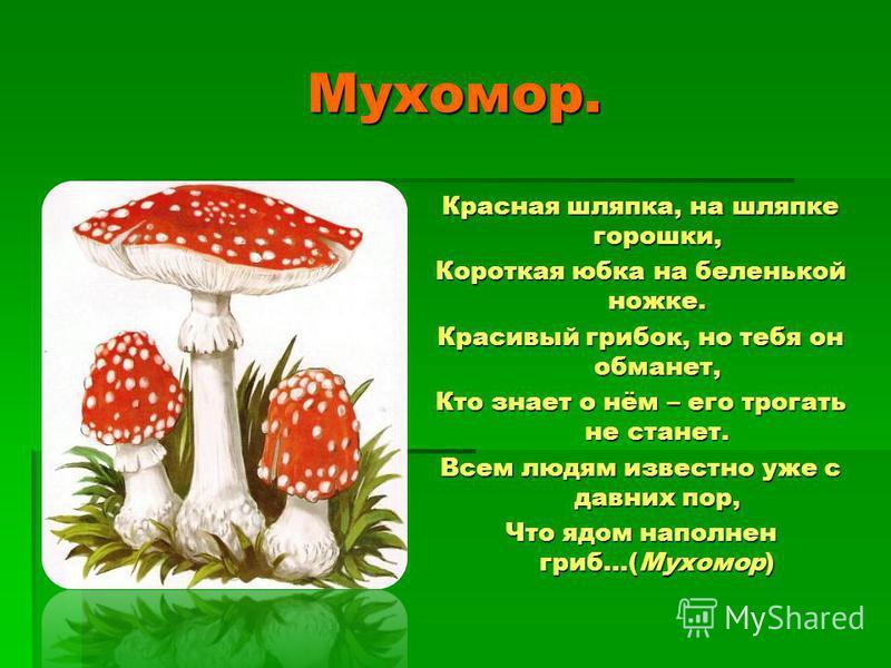 Лисички. Лисички. Под сосной растут сестрички – Ярко – рыжие лисички. Я сложу грибы в лукошко, Буду жарить их с картошкой.