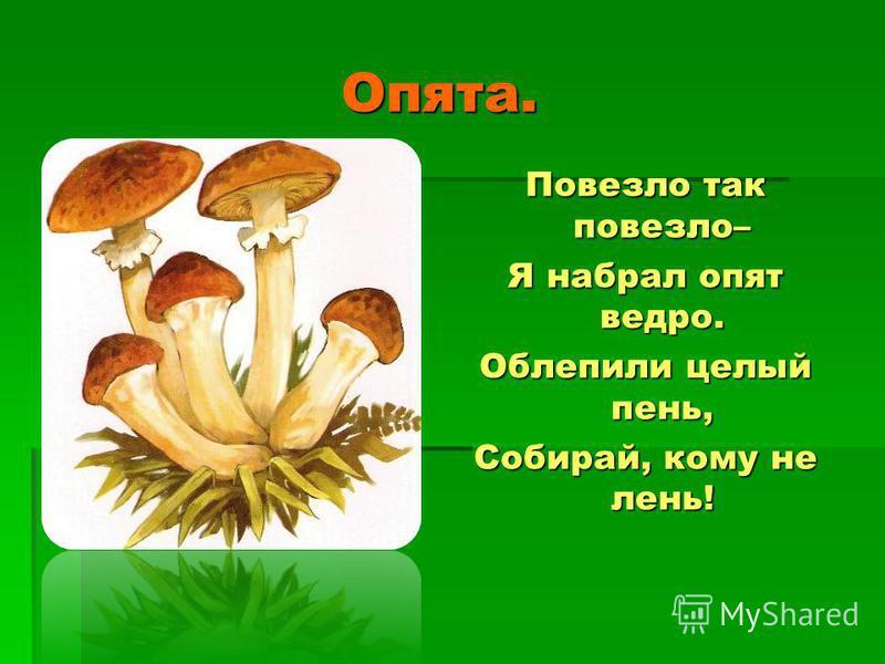 Сыроежки. Сыроежки. Вот весёлые грибы! Сколько шляпок разных Среди высохшей травы – Жёлтых, синих, красных! Это всё одна семья Сыроежек ярких. Соберу в корзинку я Осени подарки.