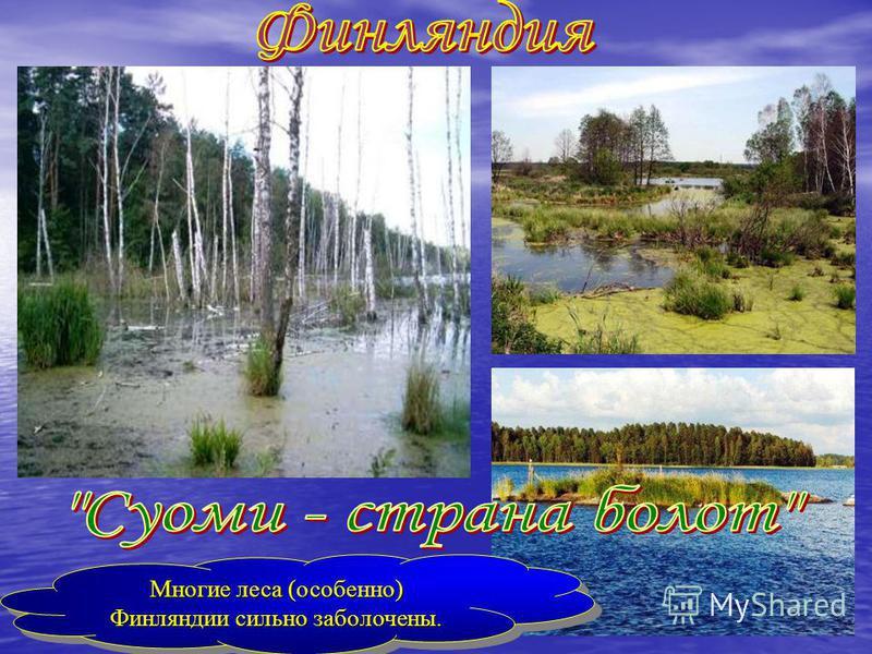 Многие леса (особенно) Финляндии сильно заболочены. Многие леса (особенно) Финляндии сильно заболочены.
