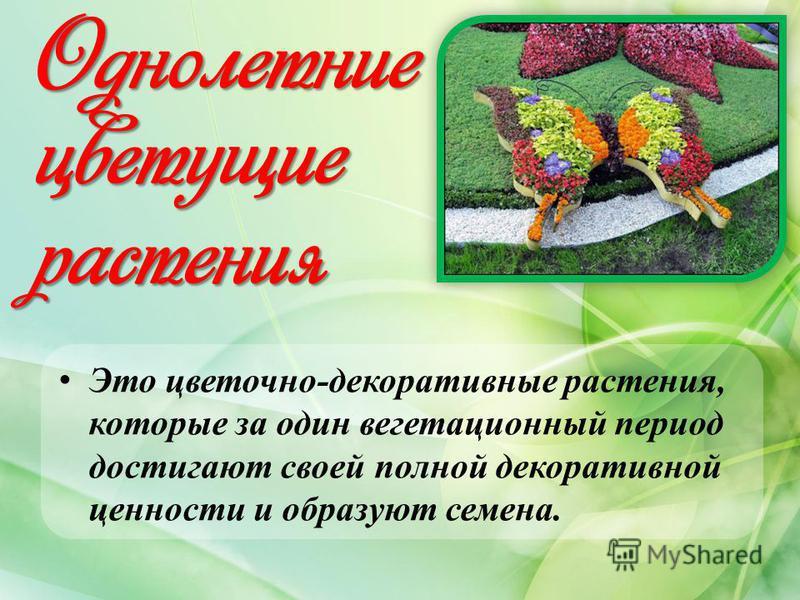 Однолетние цветущие растения Это цветочно-декоративные растения, которые за один вегетационный период достигают своей полной декоративной ценности и образуют семена.