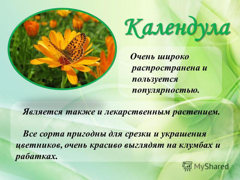 Календула Очень широко распространена и пользуется популярностью. Является также и лекарственным растением. Все сорта пригодны для срезки и украшения цветников, очень красиво выглядят на клумбах и рабатках.