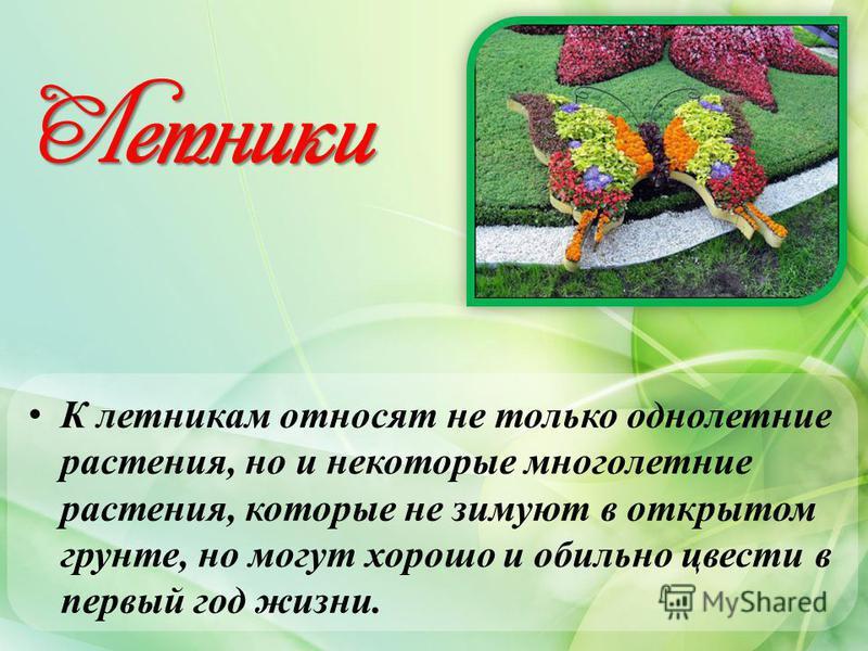 Летники К летникам относят не только однолетние растения, но и некоторые многолетние растения, которые не зимуют в открытом грунте, но могут хорошо и обильно цвести в первый год жизни.