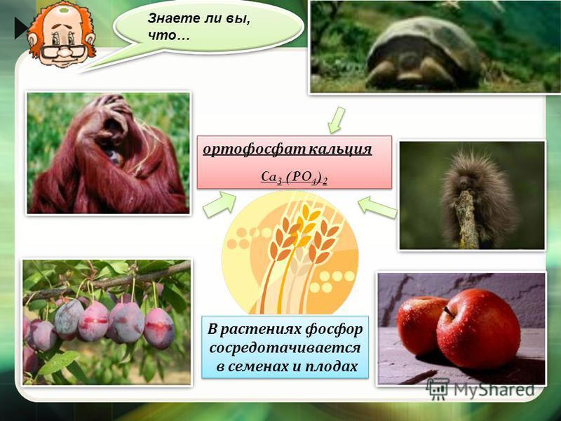 ортофосфат кальция Ca 3 (PO 4 ) 2 ортофосфат кальция Ca 3 (PO 4 ) 2 В растениях фосфор сосредотачивается в семенах и плодах В растениях фосфор сосредотачивается в семенах и плодах Знаете ли вы, что…