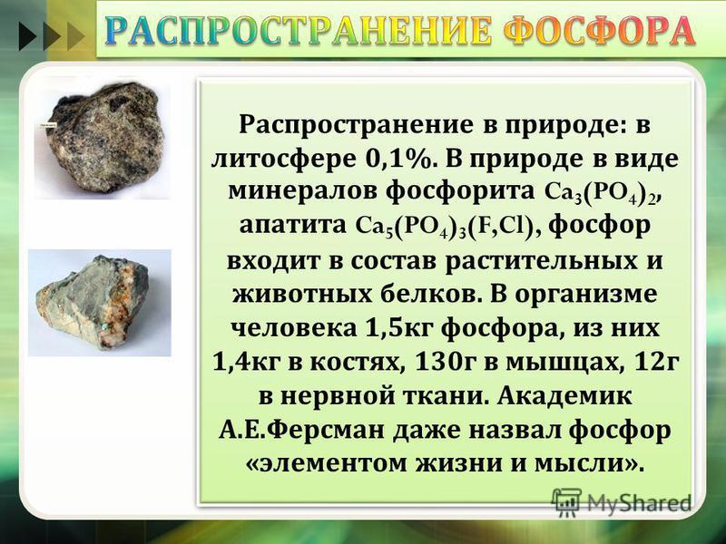 Распространение в природе : в литосфере 0,1%. В природе в виде минералов фосфорита Ca 3 (PO 4 ) 2, апатита Ca 5 (PO 4 ) 3 (F,Cl), фосфор входит в состав растительных и животных белков. В организме человека 1,5 кг фосфора, из них 1,4 кг в костях, 130