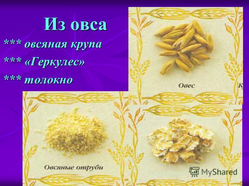 Как приготовить Геркулес - how.qip.ru