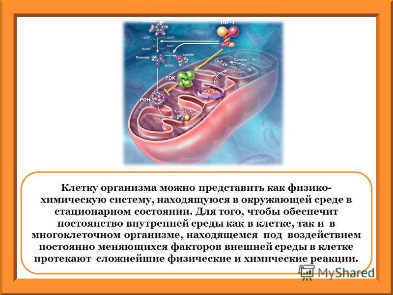 Клетку организма можно представить как физико- химическую систему, находящуюся в окружающей среде в стационарном состоянии. Для того, чтобы обеспечит постоянство внутренней среды как в клетке, так и в многоклеточном организме, находящемся под воздейс