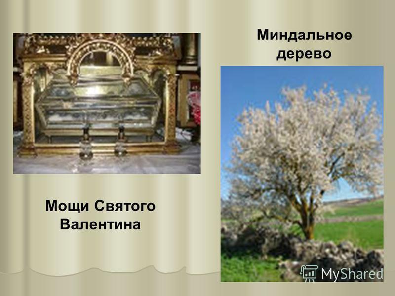 Миндальное дерево Мощи Святого Валентина