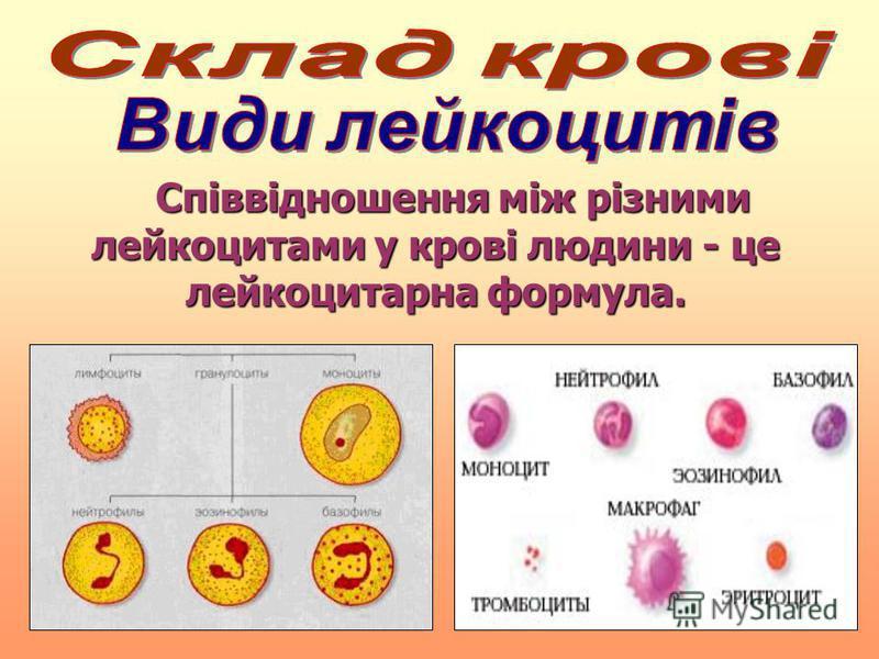 Співвідношення між різними лейкоцитами у крові людини - це лейкоцитарна формула. Співвідношення між різними лейкоцитами у крові людини - це лейкоцитарна формула.