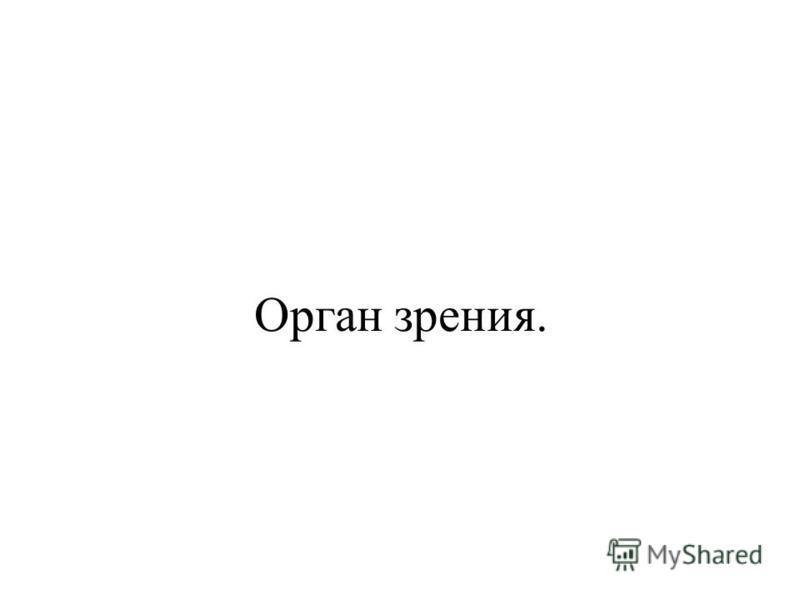 Орган зрения.