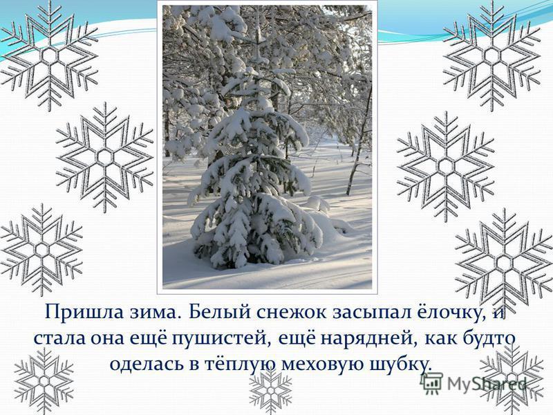 Пришла зима. Белый снежок засыпал ёлочку, и стала она ещё пушистей, ещё нарядней, как будто оделась в тёплую меховую шубку.