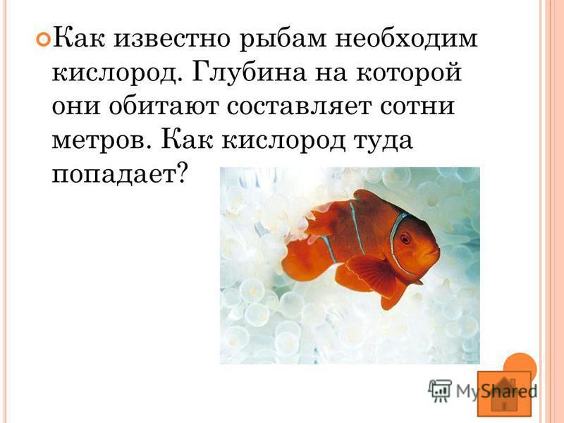 Как известно рыбам необходим кислород. Глубина на которой они обитают составляет сотни метров. Как кислород туда попадает?