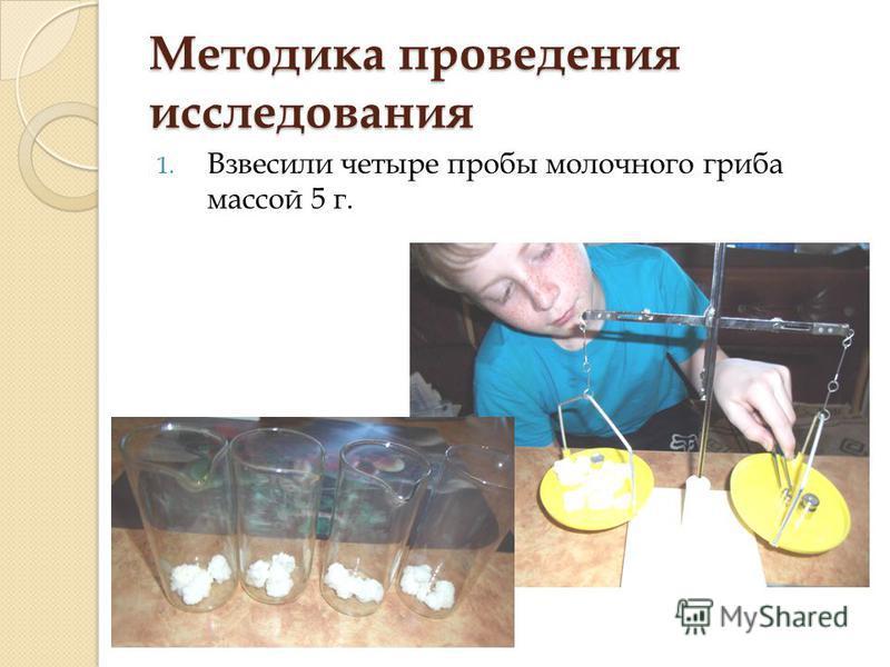 Методика проведения исследования 1. Взвесили четыре пробы молочного гриба массой 5 г.
