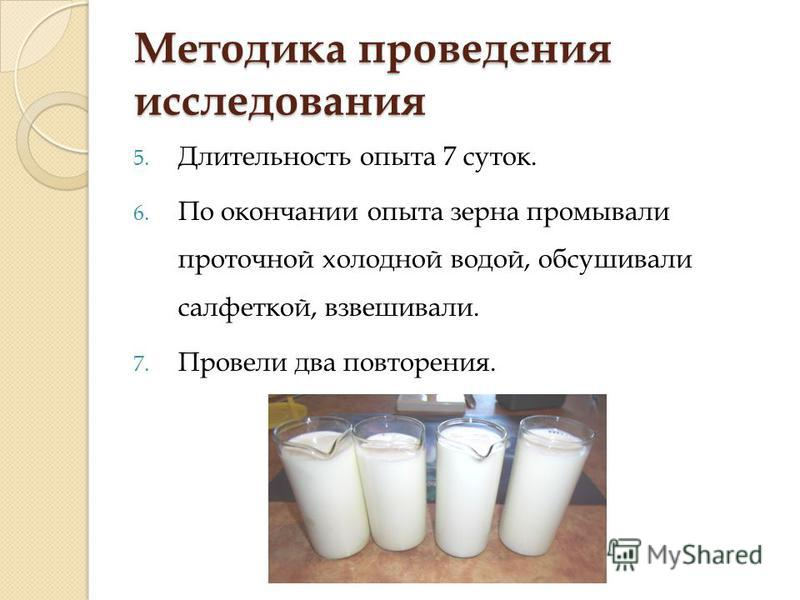 Методика проведения исследования 5. Длительность опыта 7 суток. 6. По окончании опыта зерна промывали проточной холодной водой, обсушивали салфеткой, взвешивали. 7. Провели два повторения.
