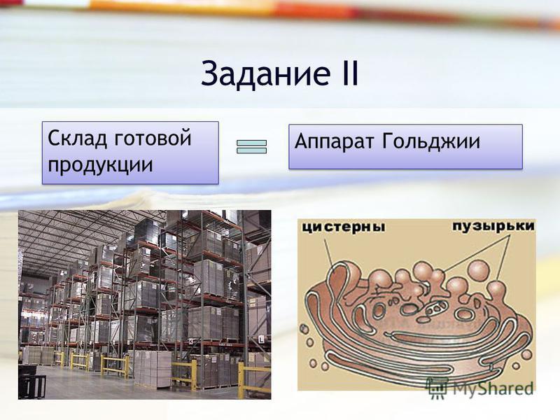 Задание II Склад готовой продукции Аппарат Гольджии