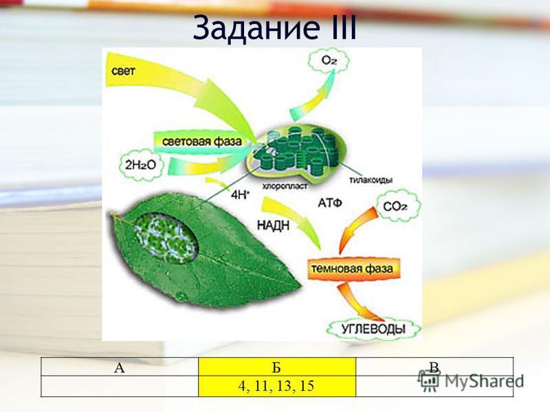 Задание III АБВ 4, 11, 13, 15