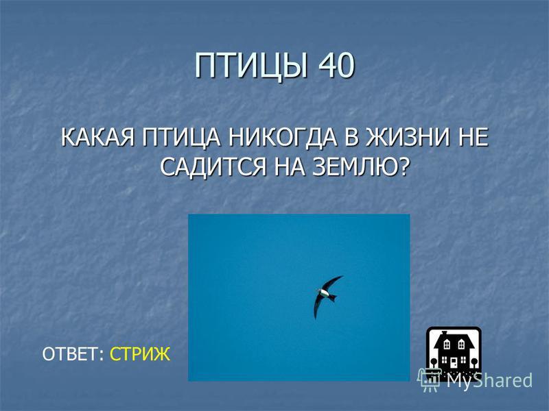 ПТИЦЫ 40 КАКАЯ ПТИЦА НИКОГДА В ЖИЗНИ НЕ САДИТСЯ НА ЗЕМЛЮ? ОТВЕТ: СТРИЖ