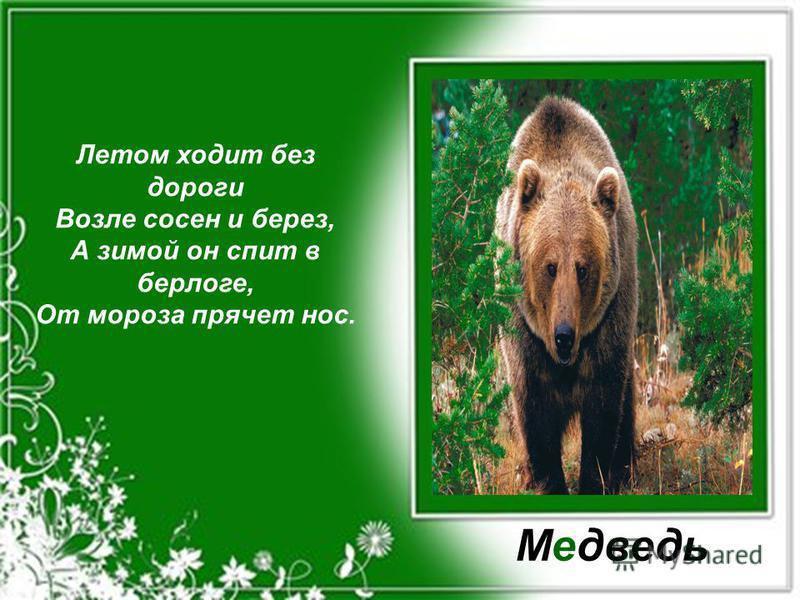Летом ходит без дороги Возле сосен и берез, А зимой он спит в берлоге, От мороза прячет нос. Медведь