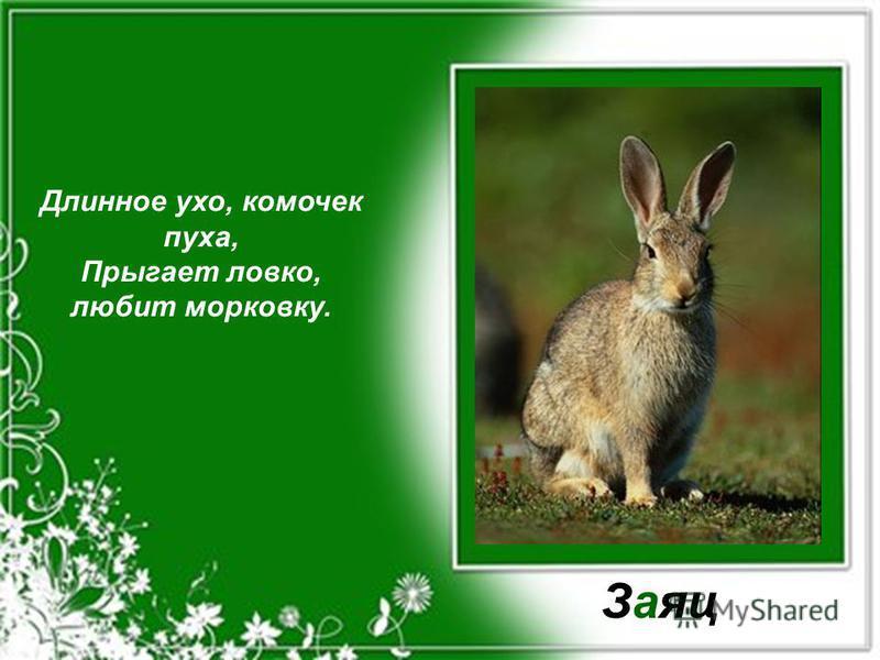Длинное ухо, комочек пуха, Прыгает ловко, любит морковку. Заяц