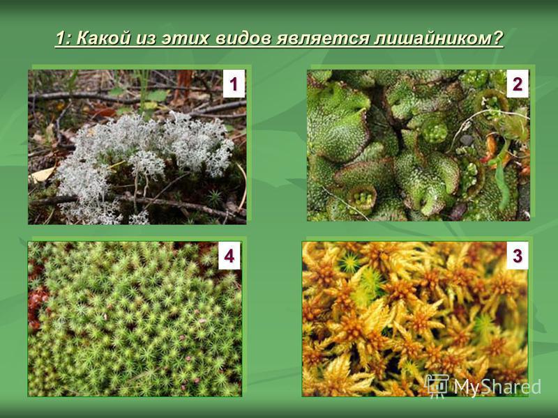 1: Какой из этих видов является лишайником? 1 3 2 4