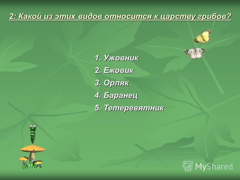 2: Какой из этих видов относится к царству грибов? 1. Ужовник 2. Ежовик 3. Орляк 4. Баранец 5.Тетеревятник