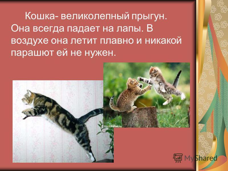 Кошка- великолепный прыгун. Она всегда падает на лапы. В воздухе она летит плавно и никакой парашют ей не нужен.