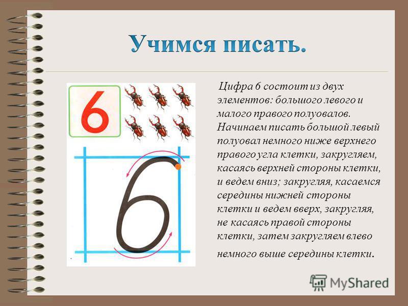 Цифра 6 состоит из двух элементов: большого левого и малого правого полуовалов. Начинаем писать большой левый полуовал немного ниже верхнего правого угла клетки, закругляем, касаясь верхней стороны клетки, и ведем вниз; закругляя, касаемся середины н