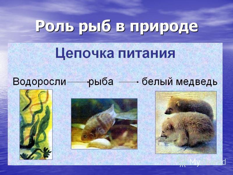 Роль рыб в природе