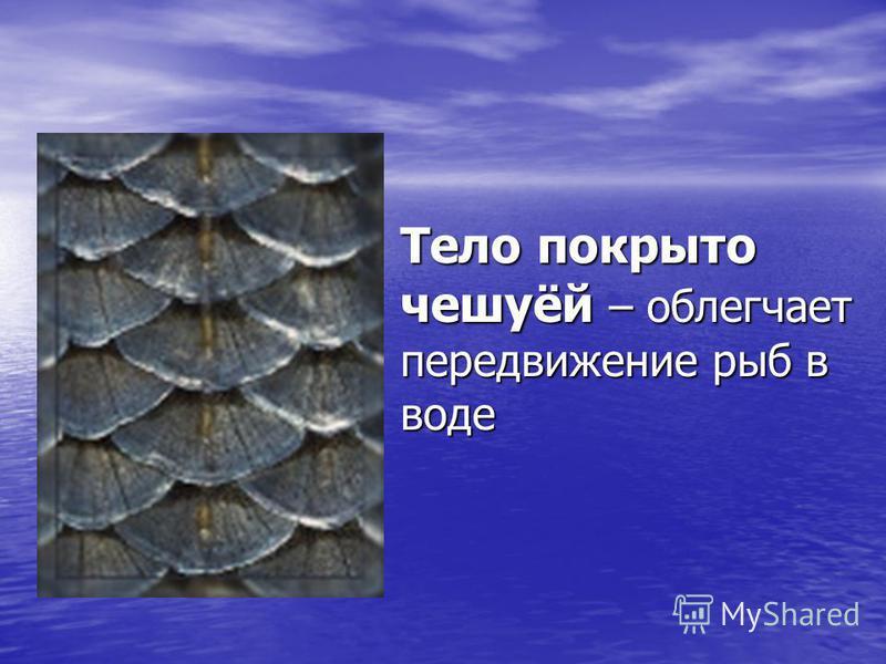 Тело покрыто чешуёй – облегчает передвижение рыб в воде