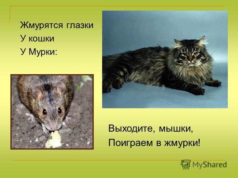 Жмурятся глазки У кошки У Мурки: Выходите, мышки, Поиграем в жмурки!