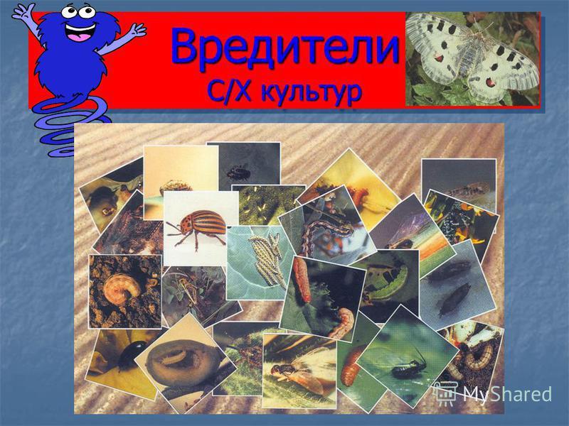Вредители С/Х культур
