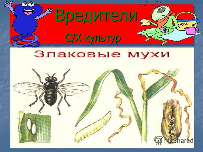 Вредители С/Х культур Вредители С/Х культур
