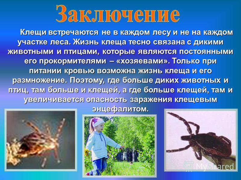 Клещи встречаются не в каждом лесу и не на каждом участке леса. Жизнь клеща тесно связана с дикими животными и птицами, которые являются постоянными его прокормителями – «хозяевами». Только при питании кровью возможна жизнь клеща и его размножение. П