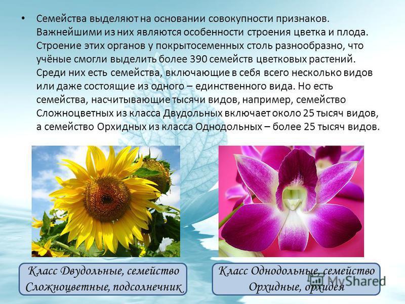 Семейства выделяют на основании совокупности признаков. Важнейшими из них являются особенности строения цветка и плода. Строение этих органов у покрытосеменных столь разнообразно, что учёные смогли выделить более 390 семейств цветковых растений. Сред
