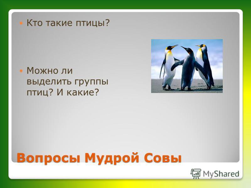 Вопросы Мудрой Совы Кто такие птицы? Можно ли выделить группы птиц? И какие? 3