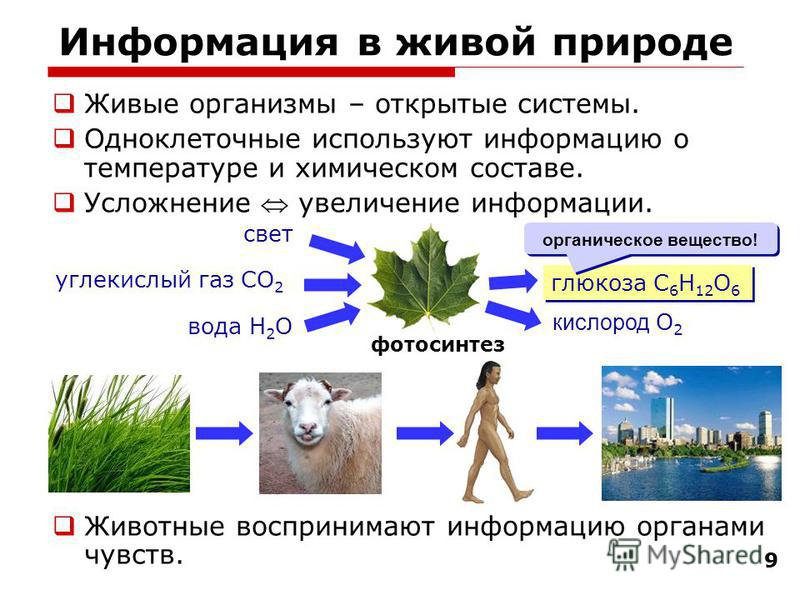 99 Информация в живой природе Живые организмы – открытые системы. Одноклеточные используют информацию о температуре и химическом составе. Усложнение увеличение информации. Животные воспринимают информацию органами чувств. фотосинтез глюкоза C 6 H 12