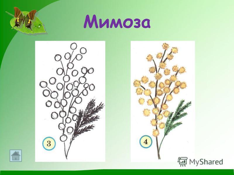Упаковка для цветов флизелин