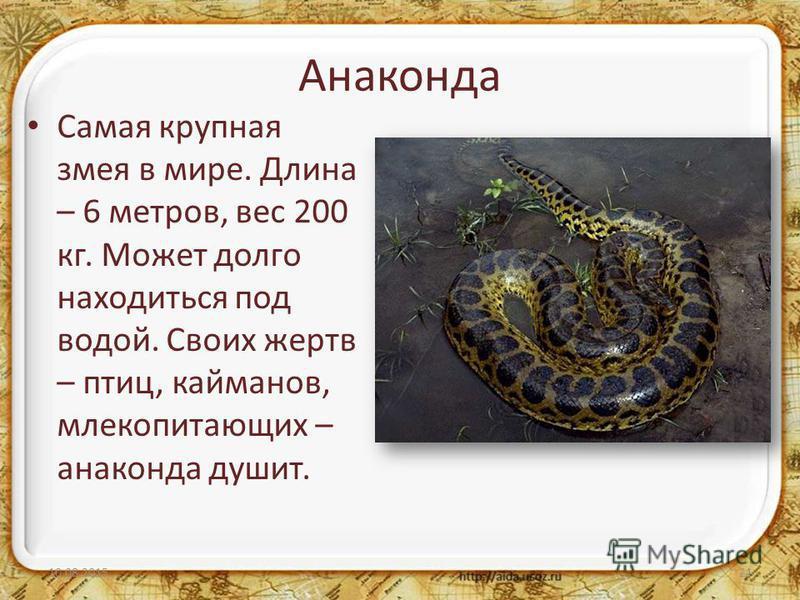 Анаконда Самая крупная змея в мире. Длина – 6 метров, вес 200 кг. Может долго находиться под водой. Своих жертв – птиц, кайманов, млекопитающих – анаконда душит. 10.08.201521
